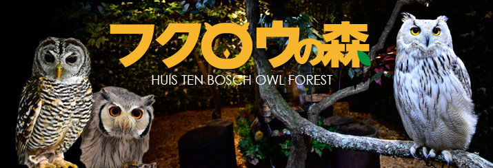 owl_forest_2