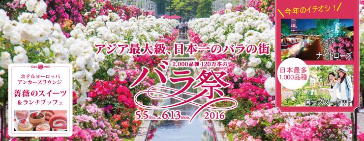 rose740-288